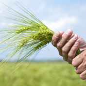 The agri-food sector aims to reduce its environmental impact by means of the Life Cycle Assessment (LCA) and the carbon footprint