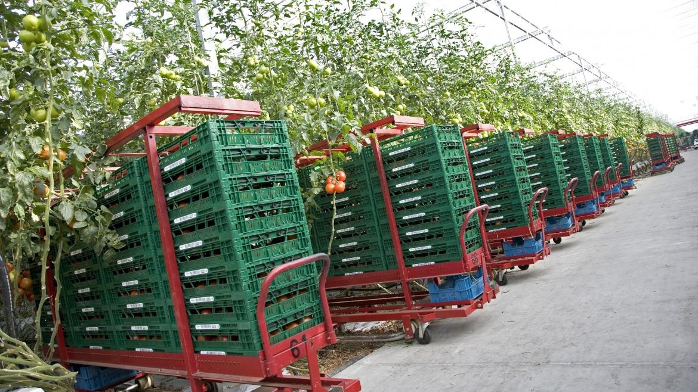 El sistema de envases reutilizables en la distribución agroalimentaria es el más sostenible