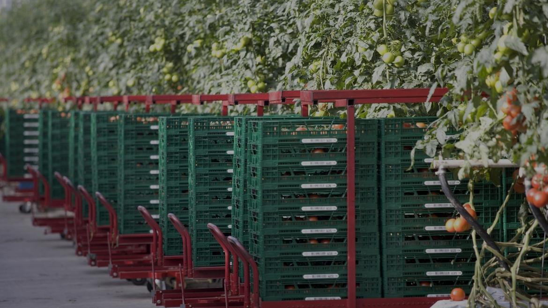 La distribución de frutas y hortalizas en envases reutilizables contribuye a evitar la pérdida de alimentos