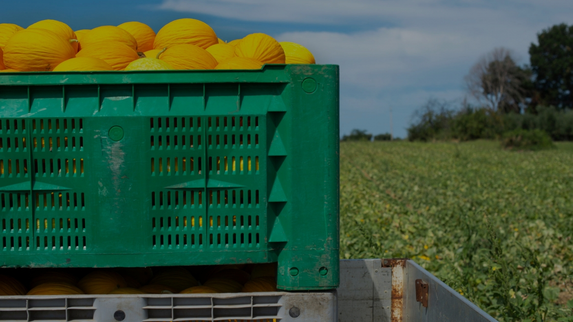 The system of reusable containers in foodstuff distribution is the most sustainable