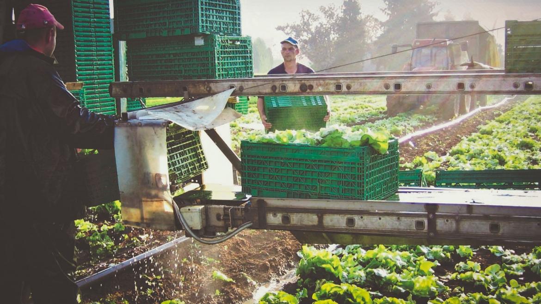 Buscar la eficiencia y la sostenibilidad, retos de la logística en el sector hortofrutícola