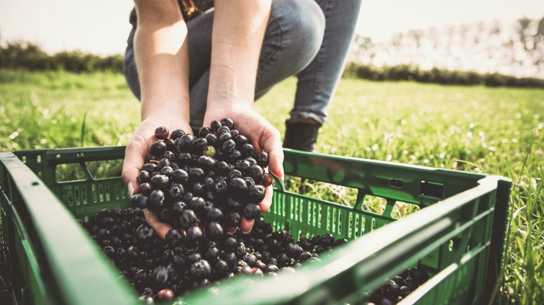 El análisis del ciclo de vida, clave para el éxito de un mercado único de productos verdes en la UE